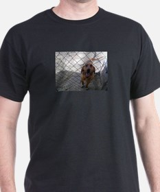 Bow the blood hound ( but I call him Samba T-Shirt