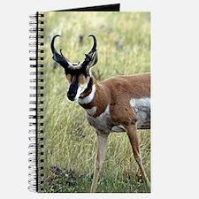 Cute Antelope Journal