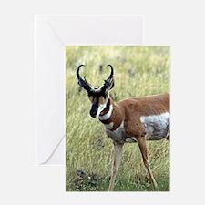 Antelope Greeting Cards