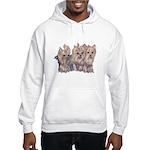 3 Little Yorkies Hooded Sweatshirt