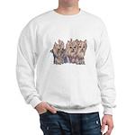 3 Little Yorkies Sweatshirt