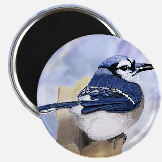 Blue Jay in Winter Magnets