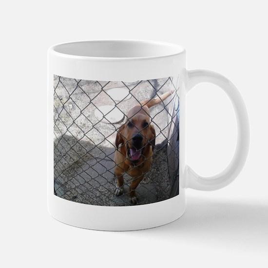 Bow the blood hound ( but I call him Samba Mugs