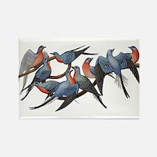 Passenger Pigeons Rectangle Magnet (10 pack)
