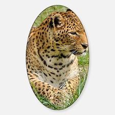 Cute Leopard print Decal