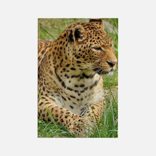 Cute Leopard print Rectangle Magnet