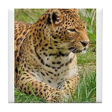 Cute Leopard Tile Coaster