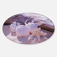 Shells Sticker (Oval)