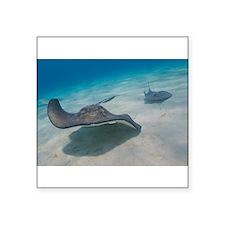 Sting Rays Sticker
