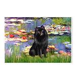 Lilies (2) & Schipperke Postcards (Package of 8)