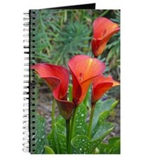 Red calla lilies Journal