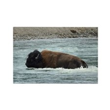 Bison in water Rectangle Magnet