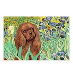 Irises & Ruby Cavalier Postcards (Package of 8)