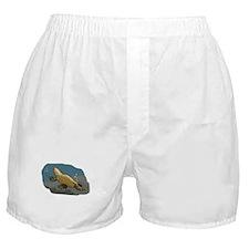 Platypus Underwater Boxer Shorts