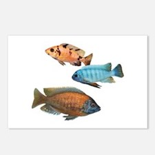 Cichlid Treo Postcards (Package of 8)