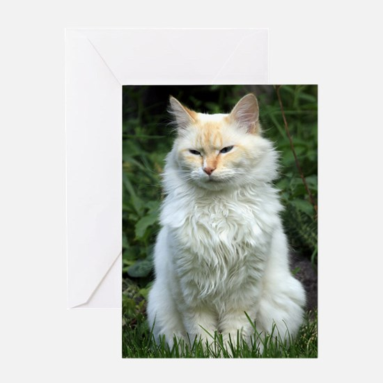 Flame Point Siamese Greeting Card