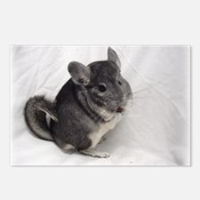 Chinchilla Postcards (Package of 8)