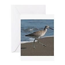 sandpipe blue bird Greeting Cards