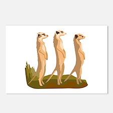 Three Meerkats Postcards (Package of 8)