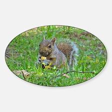 Grey Tree Squirrel Decal