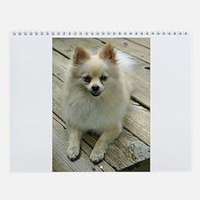 Pomeranian Wall Calendar