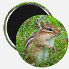Chipmunk Magnets