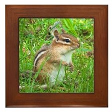 Chipmunk Framed Tile