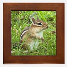 Chipmunk Framed Tile