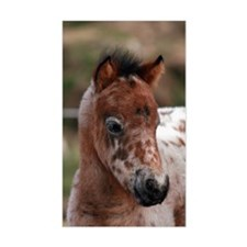 """Knabstrup foal 1"" Rectangle Decal"