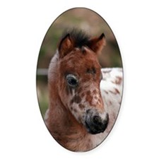 """Knabstrup foal 1"" Oval Decal"