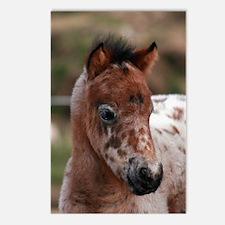 """Knabstrup foal 1"" Postcards (Package of 8)"