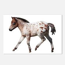 """Knabstrup foal 2"" Postcards (Package of 8)"