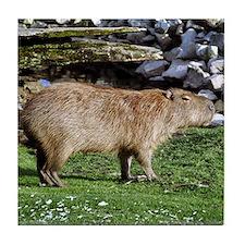 Capybara with Rocks Tile Coaster