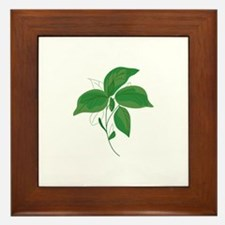 Basil Leaves Framed Tile