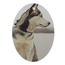 Siberian Husky Oval Ornament