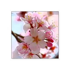 "cherry blossoms Square Sticker 3"" x 3"""