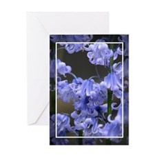Bluebells Greeting Cards