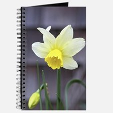 Jack Snipe Mini Daffodil Journal