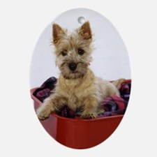 Baby Cairn Terrier Ornament (Oval)