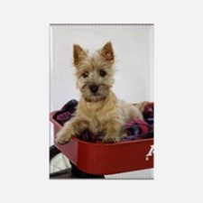 Baby Cairn Terrier Rectangle Magnet