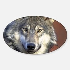 Wolf 024 Decal
