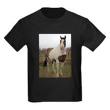Paint horse,2 T