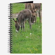 Miniature Donkey Foal Journal