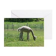 White Alpaca Greeting Cards (Pk of 10)