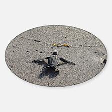 Cool Leatherback turtle Decal