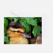 Mallard Duckling Greeting Cards