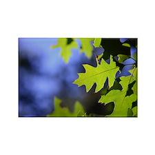Oak Leaves Magnets