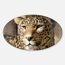 Leopard001 Decal