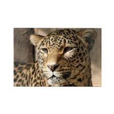 Leopard001 Magnets