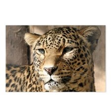 Cute Leopard Postcards (Package of 8)